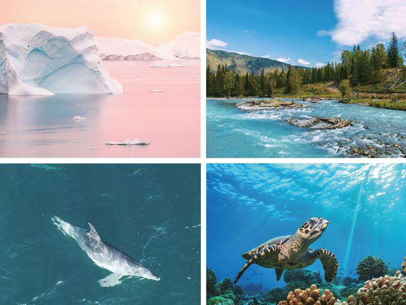 키워드로 보는 기후 변화와 환경권